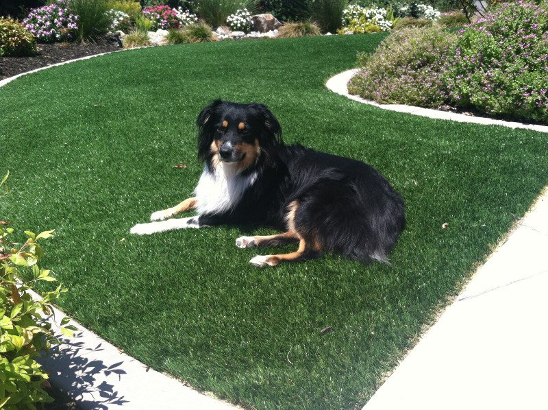 Dog laying on a curved strip of artificial grass